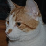 Rocky J Kittycat